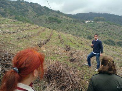 Un paseo hasta el viñedo donde atendimos las explicaciones sobre las labores y tareas que se llevan a cabo sobre el terreno.